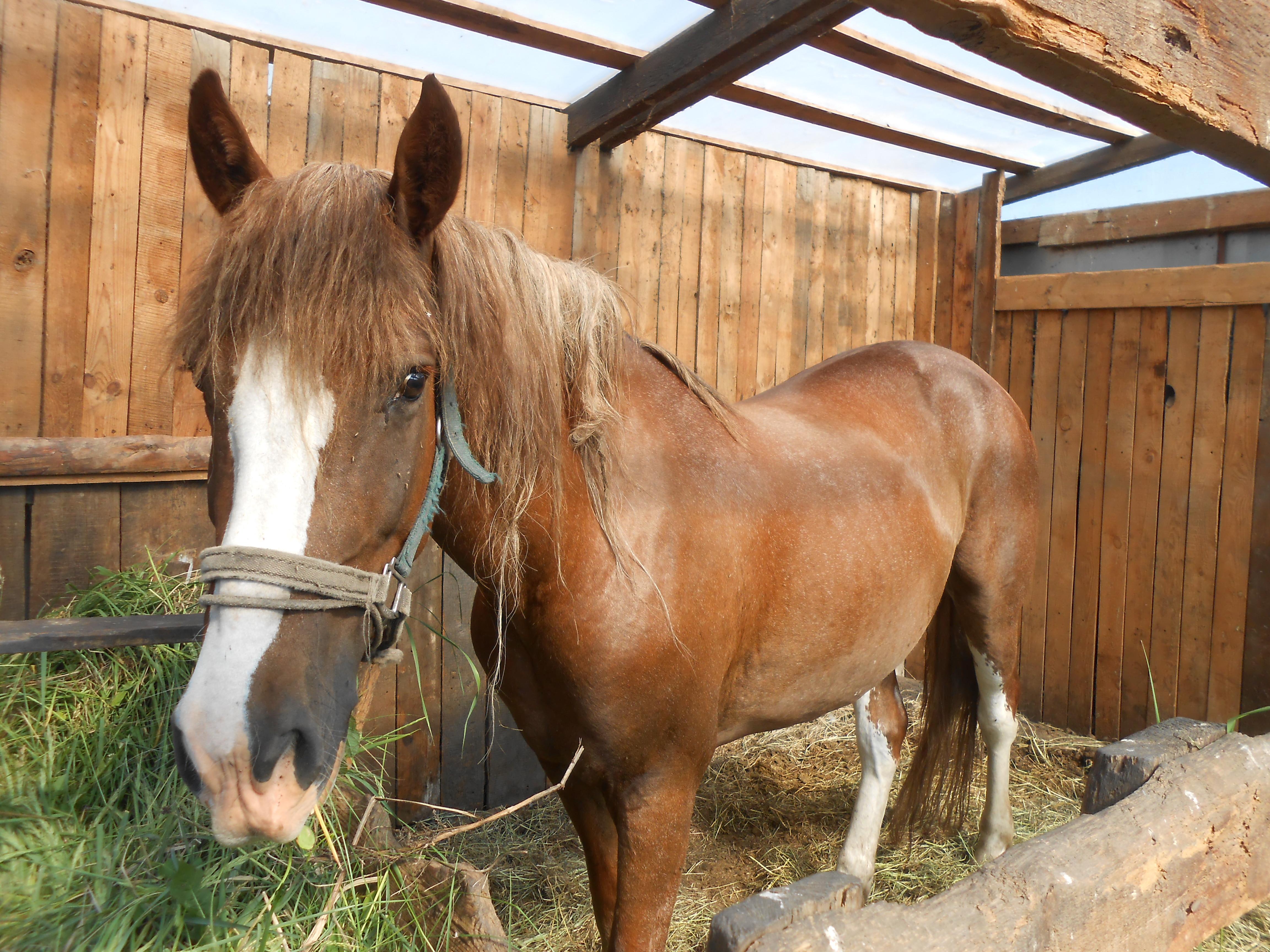 Объявления куплю продам лошадь куплю квартиру по ипотеке в сургуте объявления