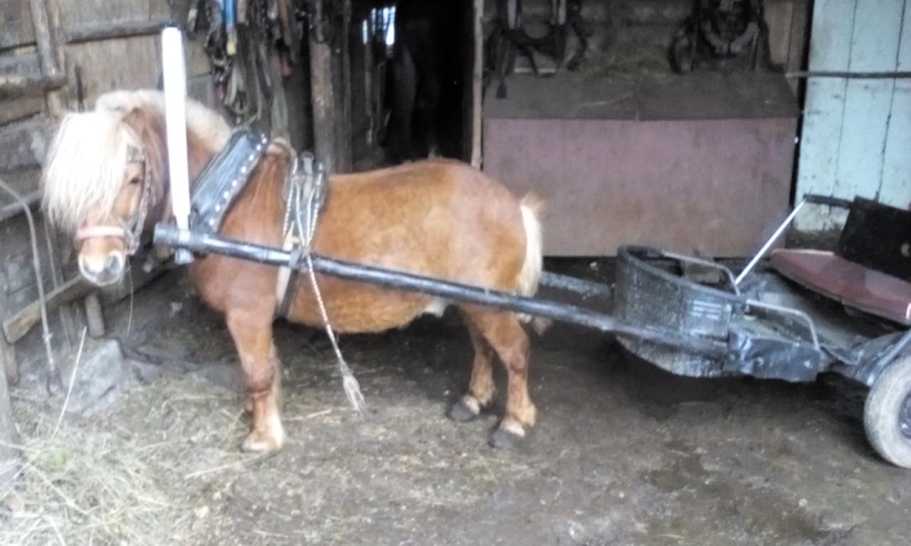 Подать объявление о продаже седла для лошади самые свежие вакансии в хабаровске